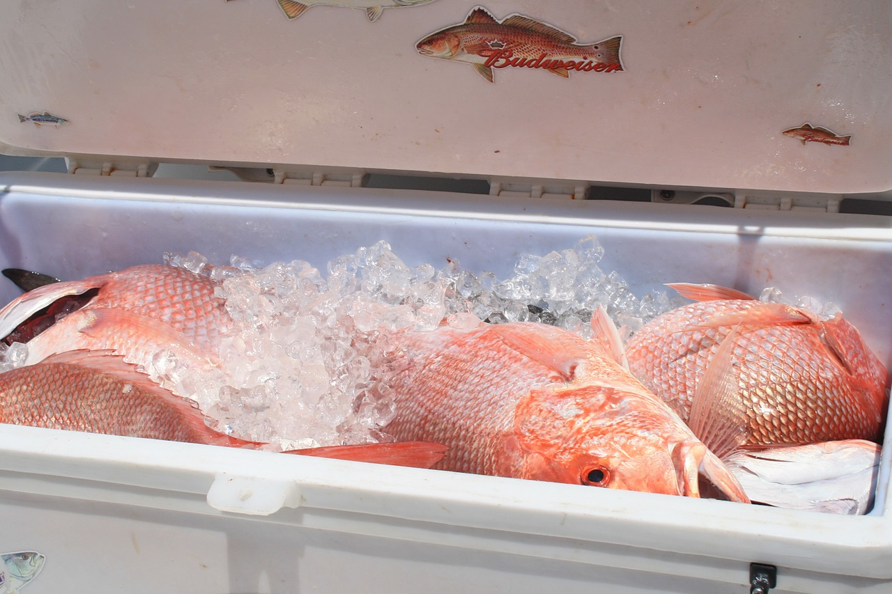 red snapper in cooler